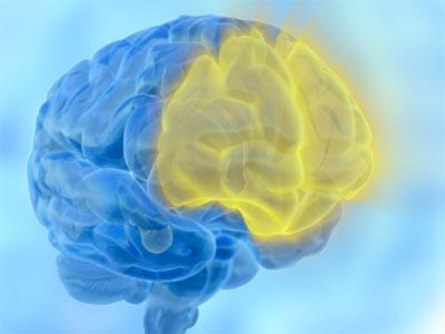 Cervello, corteccia prefrontale