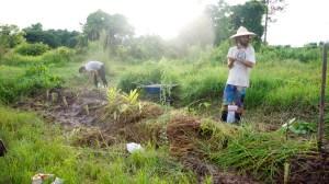 Interns establishing a food forest
