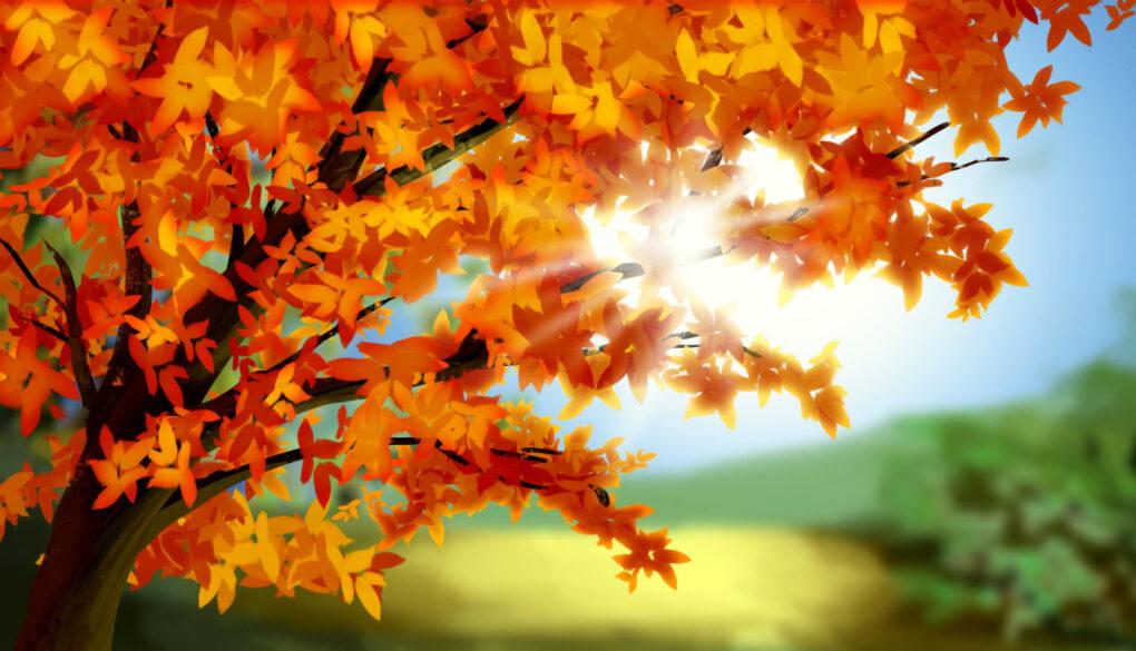 Japan Fall Colors Wallpaper Autumnal Equinox Day Gaijinpot Study