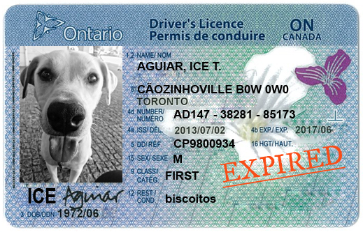 how to get my ontario drivers license