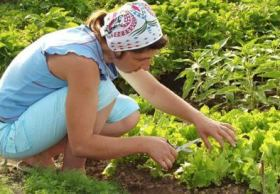 Gardening 101:  What Seeds Are You Planting?