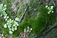 Moss and new growth©Gail Harker