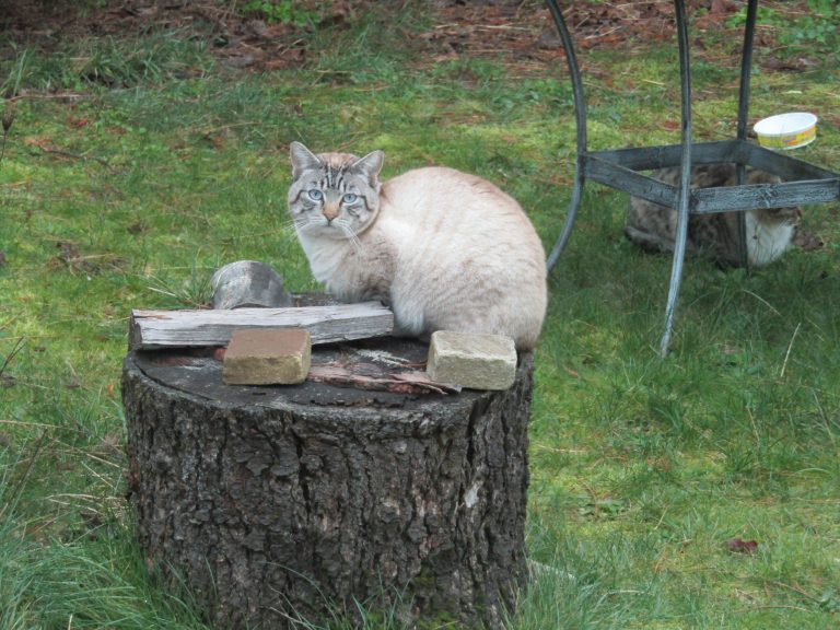 kitty on a stump