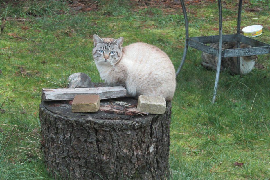 kitty on a stump