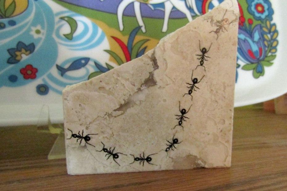 ant print on broken stone tile