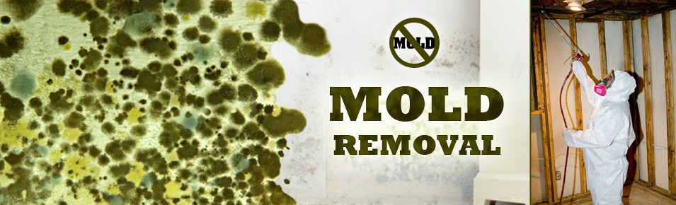 Gainesville Florida Mold Remediation