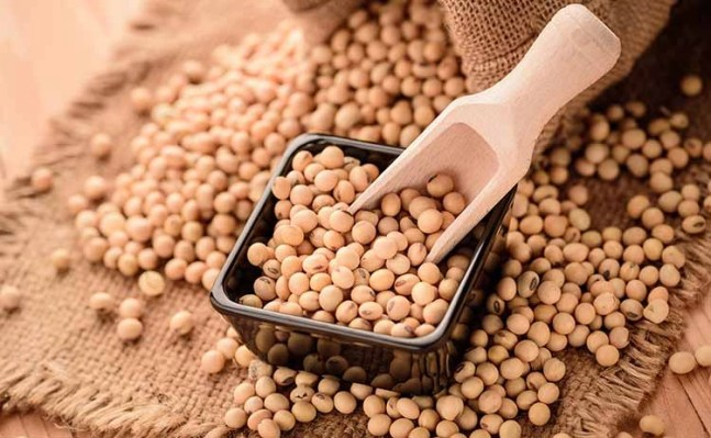 soy protein for muscles