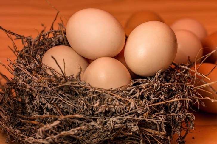 eggs for building muscle