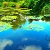 岐阜のモネの池が気になる~!駐車場はある?