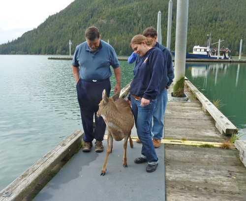 Deer Ones