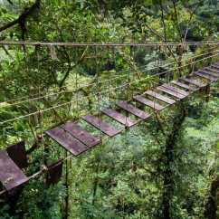 Forest Canopy Diagram Lennox Wiring Diagrams Amazon Rainforest | Galahotels Blog