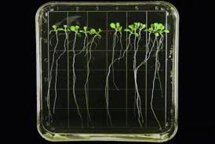 plants space