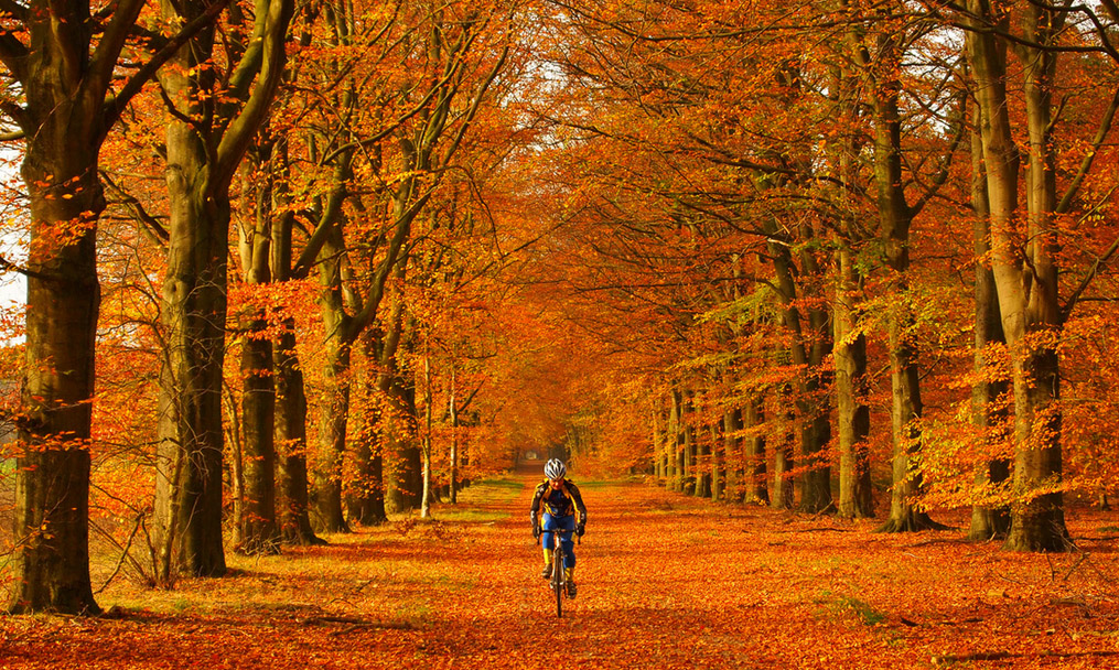 autumnc.cycling