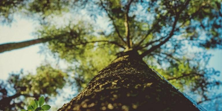 Jak w 4 prostych krokach przestać być drzewem