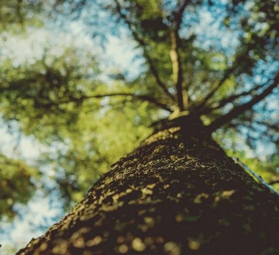 zielone drzewo widziane wzdłuż pnia od dołu