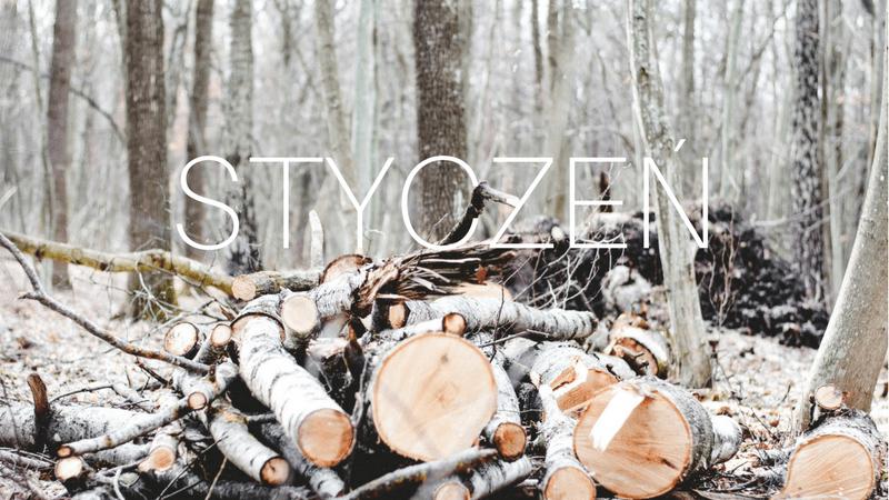 zrobione w lesie zimą zdjęcie sterty ściętych drzew, przysypanych śniegiem