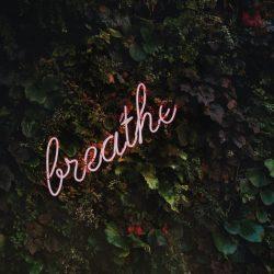 ściana zielonego listowia, a do niej przyczepiony neon z napisem breathe, czyli w zdrowiu i w chorobie zachowaj spokój