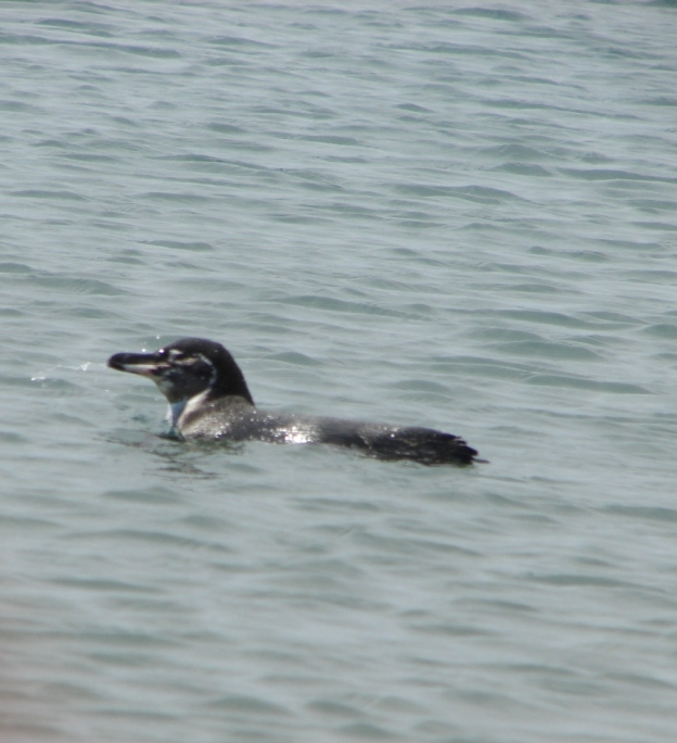 20090912_penguin_1