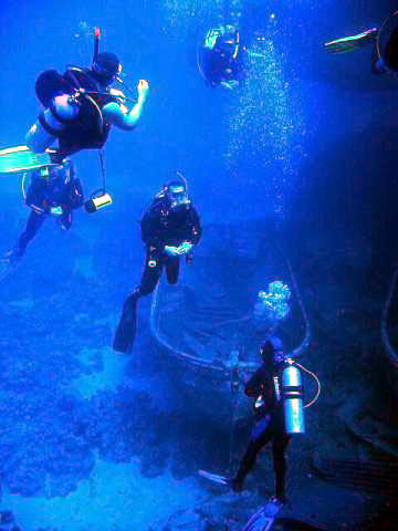 scuba divings safety