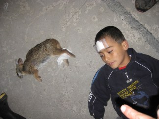 Children and animals alike were injured.