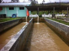Long pools for the comercial sized fish, water piped in from the river.