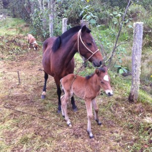 Thin but healthy, mom and child will be moved out to other pasture when there won't be many ditches and fences to harm the little one.
