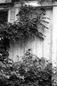 Black and White image from This Old House series.