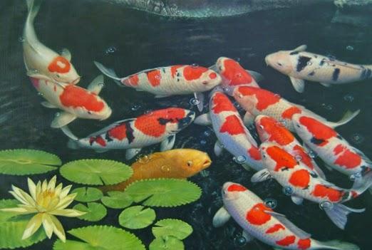 3d Koi Pond Live Wallpaper Mengapa Ikan Koi Di Jepang Sangat Mahal Dibandingkan Ikan