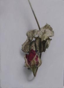 Rosa 1 (16 x 22)