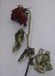 Rosa 2 (16 x 22)