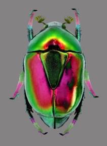 8-Escarabajo12