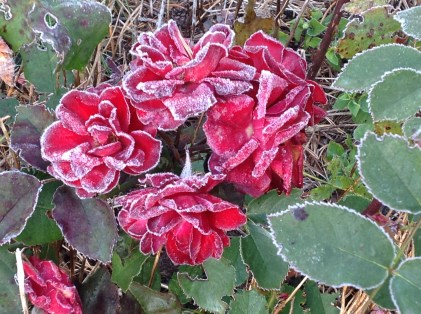 Morning frost.