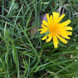 Fleur à fleurer