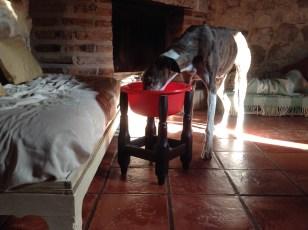 Adopcion galgos, collares antiescape, galicia, asturias