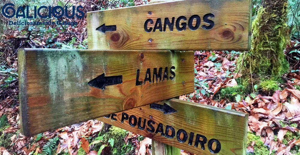 Ruta do Muiño de Garcia, Ribeira de Piquin ( Lugo ) , Galicious
