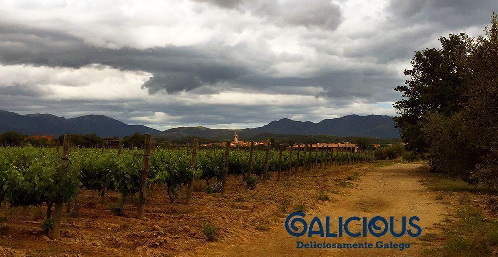 Bodega La Vinyeta ( Foto de Galicious )
