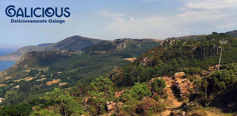 Bosque de Petroglifos ( Foto de Galicious )