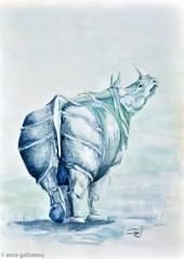 galigallery-rhino-6236
