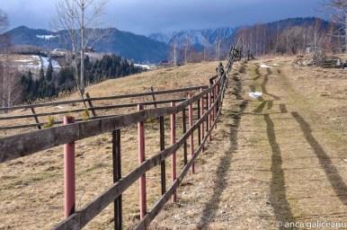 in lungul gardului-4