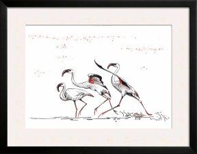 flamingo - ascensiunea II