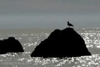 Seagull in silhouette.
