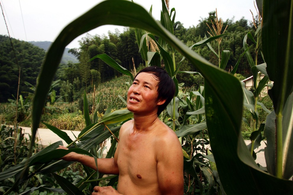 A local man stands in fields of corn near the bamboo forests of Zhuhai.