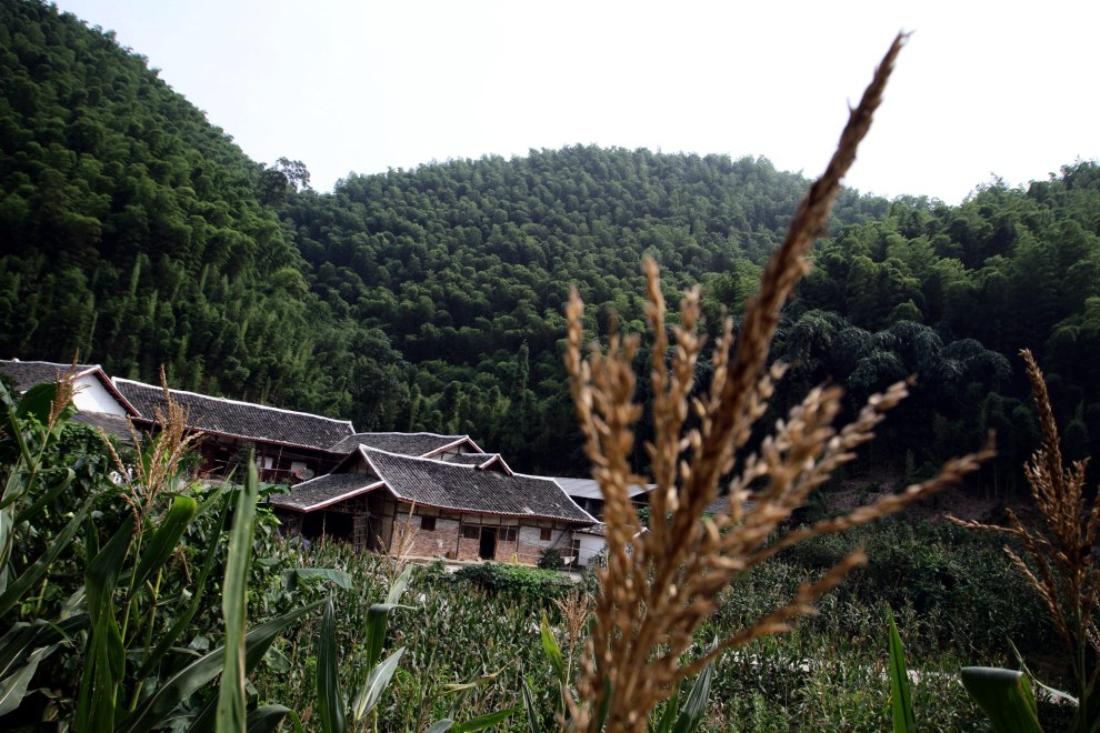 A farmhouse sits on the edge of the Bamboo Sea.