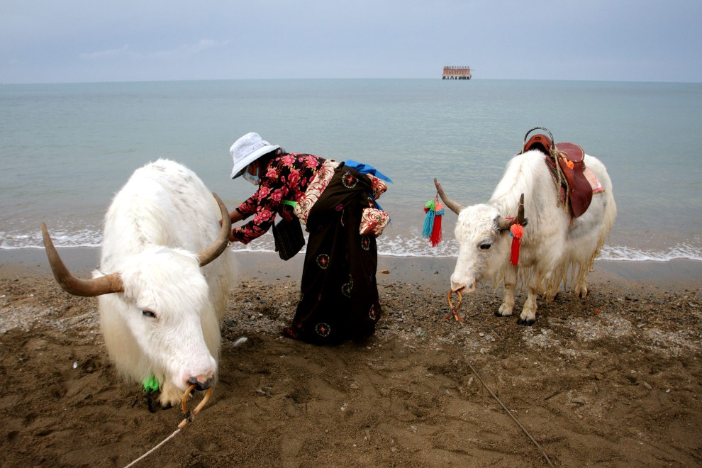 A Tibetan woman tends to her yak on the shores of Qinghai Lake. Passing tourists pay to have their photo taken with the yaks. On the horizon is China's first torpedo testing station. Decommissioned, it is now a tourist destination.
