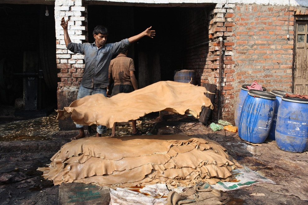 A tannery worker throws animals hides into a pile after having just been treated with chemicals and dyes.
