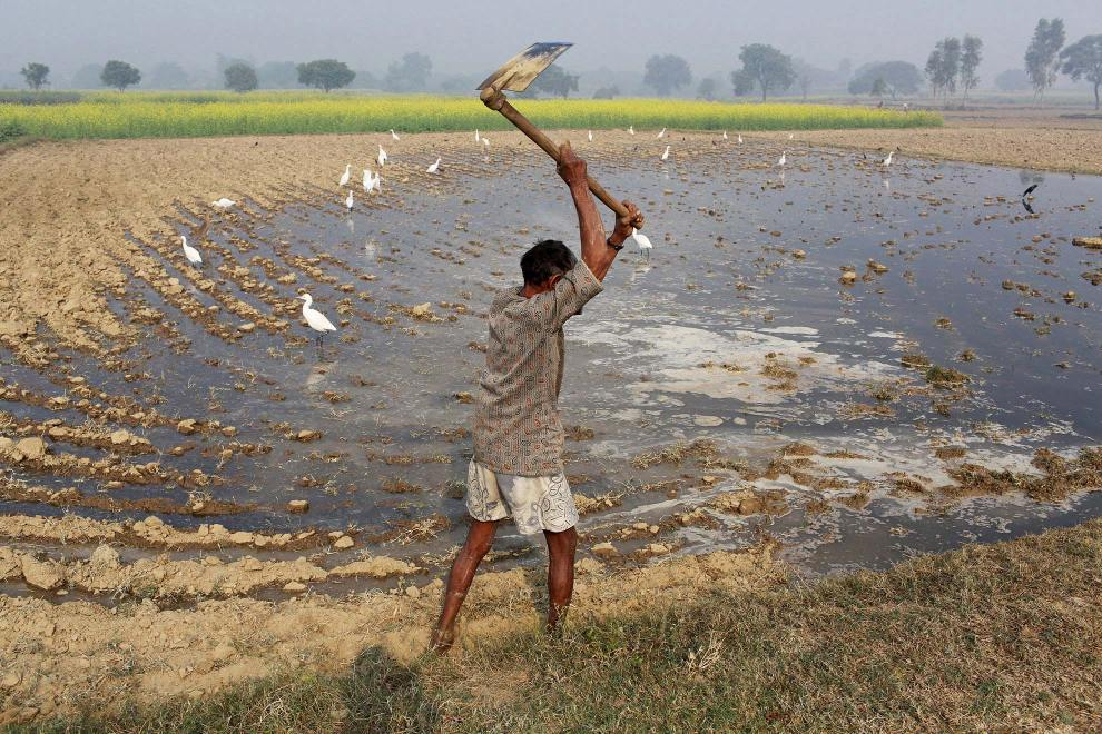 A farmer works in his field that has been irrigated with polluted water.