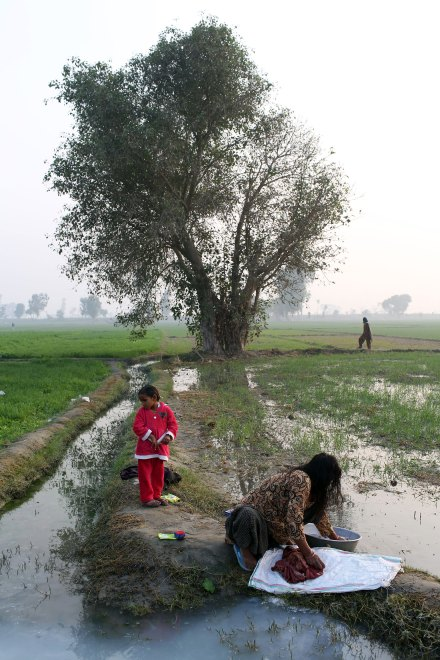 A woman washes clothes in a drainage channel next to agricultural fields.