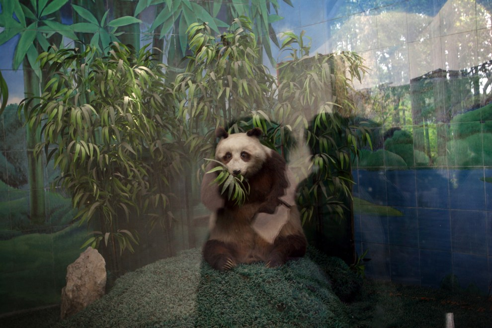 A model of a panda in an enclosure in Wuhan zoo.