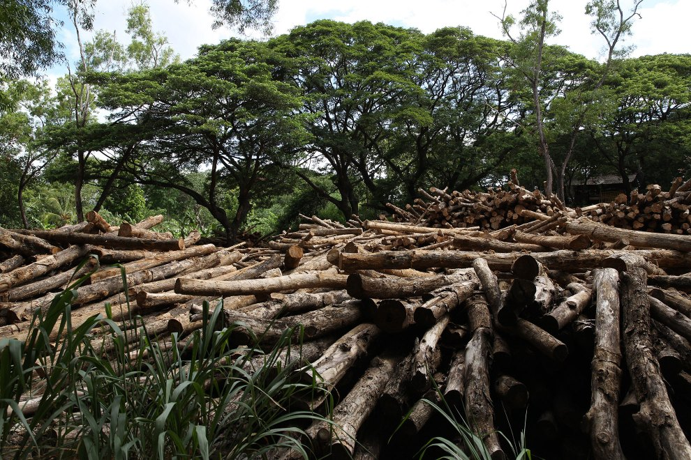 A sea of logs lie in a clearing in a forest in central Sri Lanka. Historically, deforestation has been one of the country's major environmental challenges. Rates have decreased in recent years and illegal logging is rare, however the legal use of forest resources still puts pressure on the remaining pockets in this major biodiversity hotspot which is home to some of the world's most unique animal and plant species.