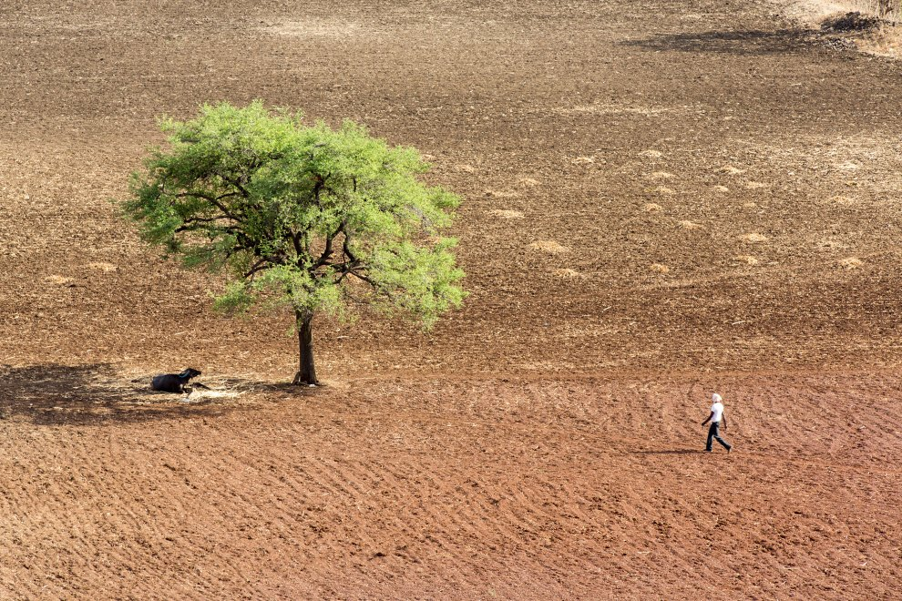 A farmer walks by a tree in the middle of drought-stricken farmland near the town of Latur, in western India.